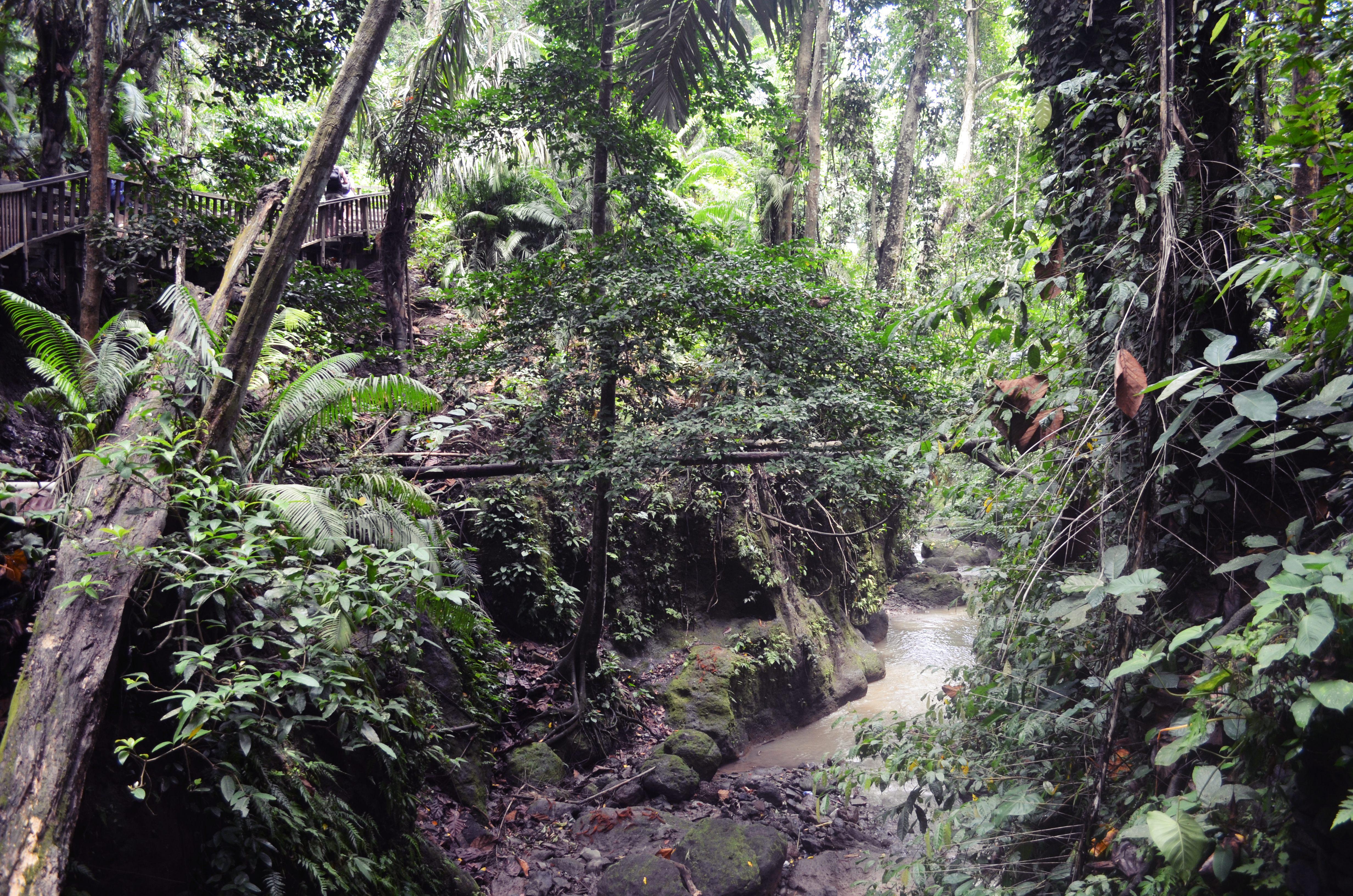 DSC_7131 La forêt des singes à Ubud