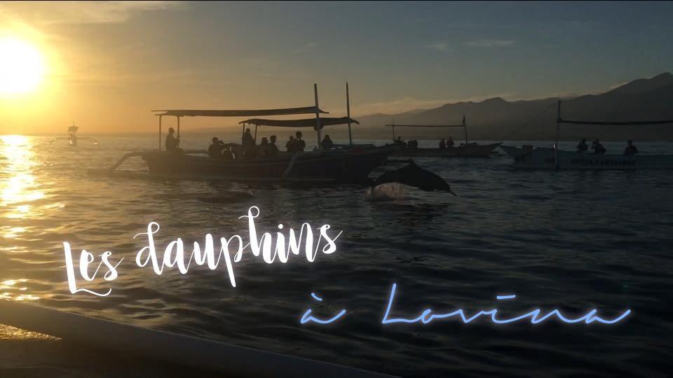 Les dauphins à Lovina